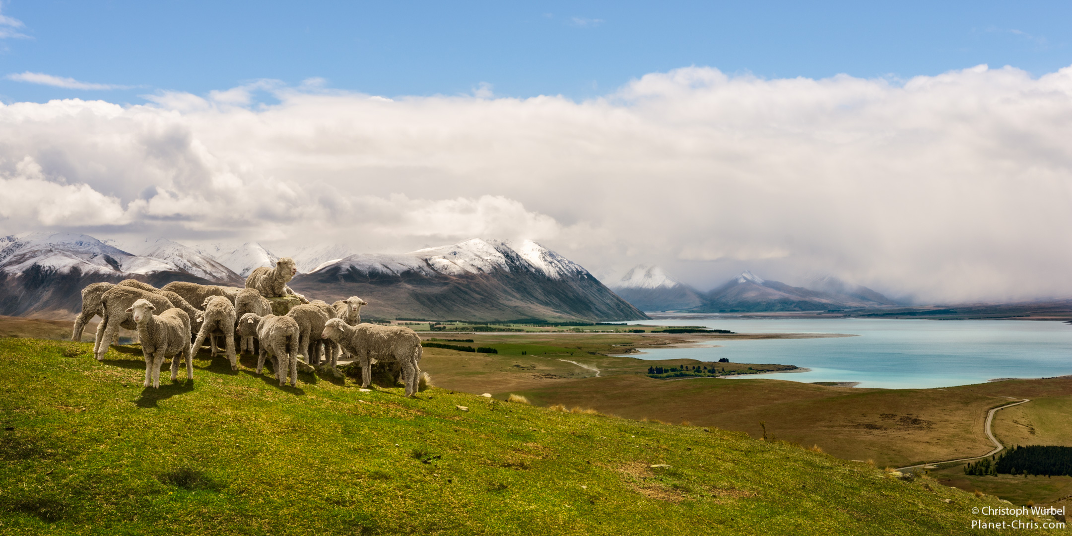 Sheeps in the foreground, and mountains as well as lake Tekapo in the background